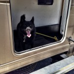 """Maya checks out the back storage compartment of our touring RV. That's where they're gonna put me if I misbehave ... the """"doghouse,"""" if you will."""